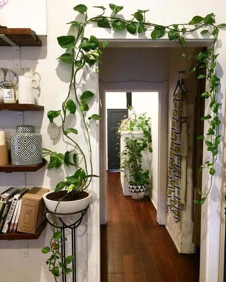 Indoor jungle; Small rooms gardening; idées pour aménager son balcon; Bancos; … #among # jungle #garden #ide #i