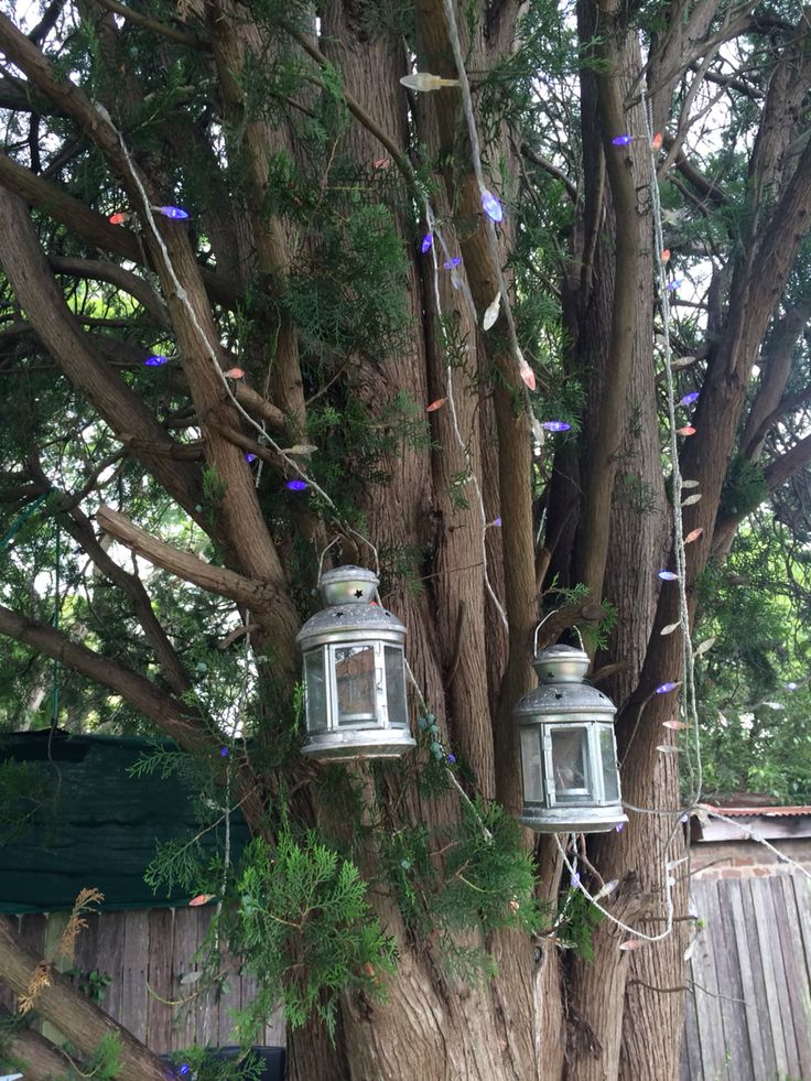 Hang some lanterns in your tree