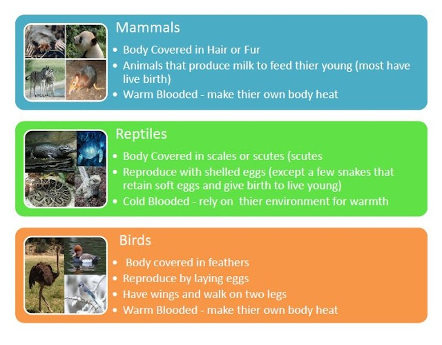 Mammals, Reptiles and Charts on Pinterest