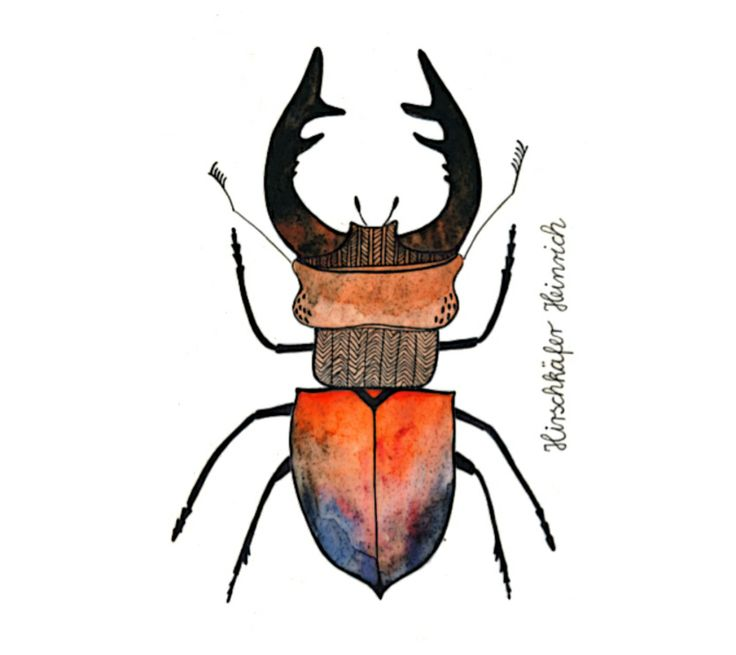 Stag beetle / Hirschkäfer by Frau Ottilie