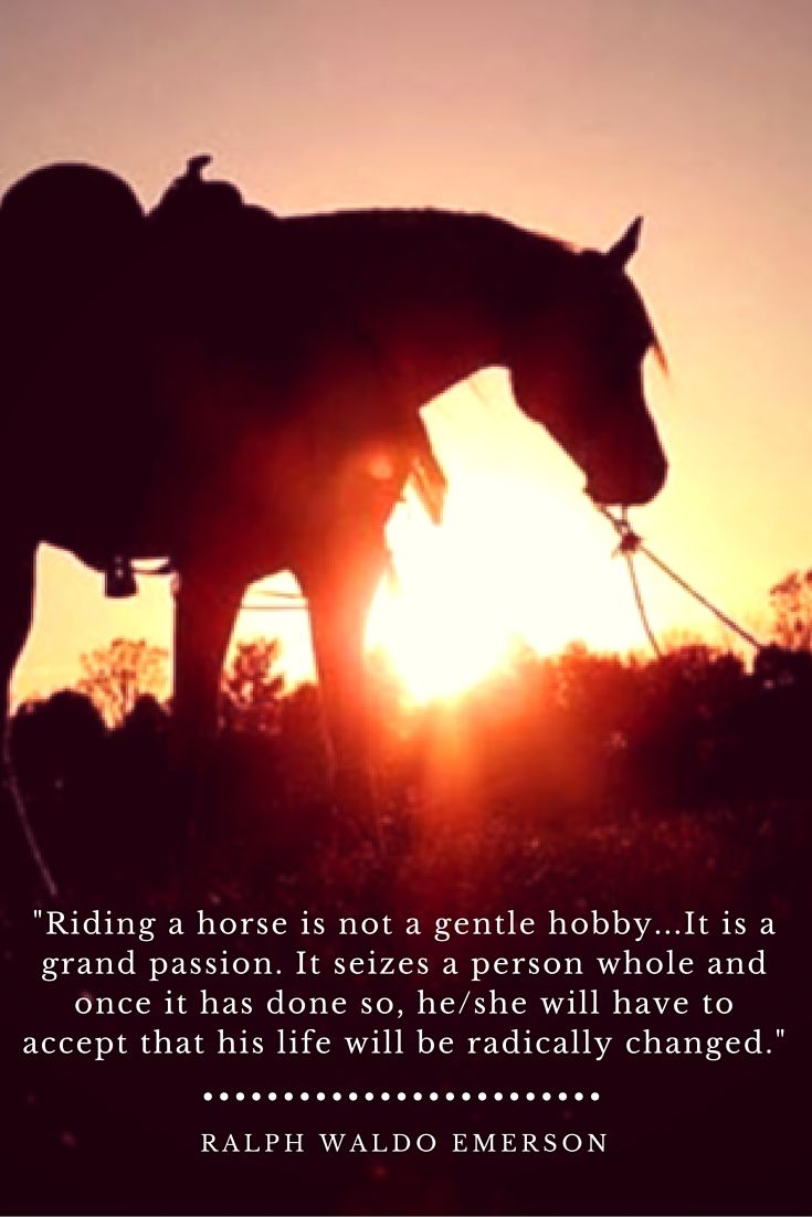 """Riding a horse is not a gentle hobby...It is a grand passion. It seizes a person whole and once it has done so, he/she will have to accept that his life will be radically changed."" Ralph Waldo Emerson Horse Inspirational Quote"