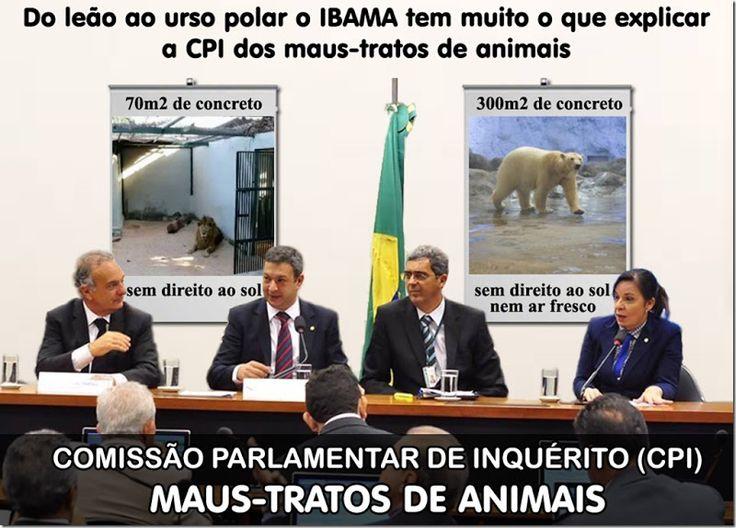 Mural Animal: Do leão ao urso polar o IBAMA tem muito o que explicar a CPI dos maus-tratos de animais