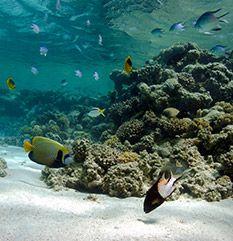 Fotografia podwodna dla dociekliwych