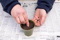 How to grow sunflowers from seed | gardenersworld.com