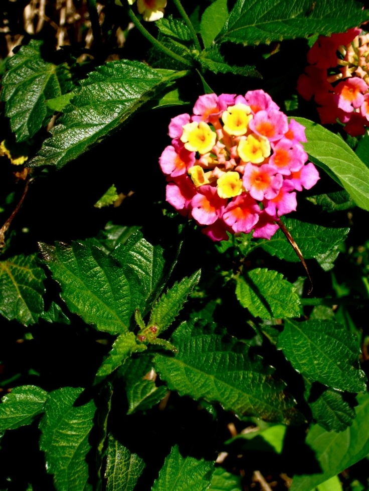 91 best florida flowers images on pinterest