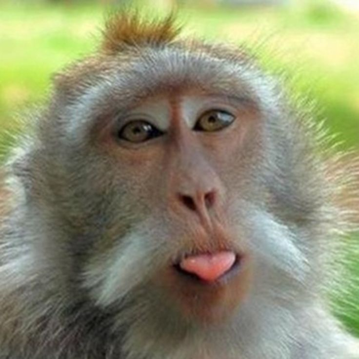 #jokes #monkey  I own this Free App; Monkey Jokes - Best, cool and funny jokes!  https://itunes.apple.com/us/app/id758443886