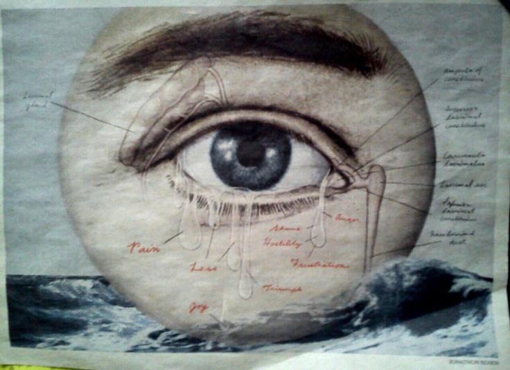 .Con este ojo tan didáctico pintado por Jonatan Rosen queremos contaros unhallazgo sorprendente que tal vez obligue a cambiar los libros de Oftalmología; un equipo de científicos de la Universidad de Nottingham (Reino Unido), descubrió una capa de células en la córnea del ojo humano que era totalmente desconocida, publica la revista Ophtalmology. Y se espera que mejore los resultados de intervenciones quirúrgicas del ojo y de los trasplantes de córnea, indican los autores del estudio.