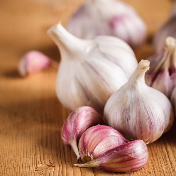cardiovascular disease and the benefits of garlic intake The present article reviews the historical and popular uses of garlic,  garlic has  been suggested to affect several cardiovascular risk factors  garlic powder  allicin and a small amount of oil-soluble sulfur compounds.