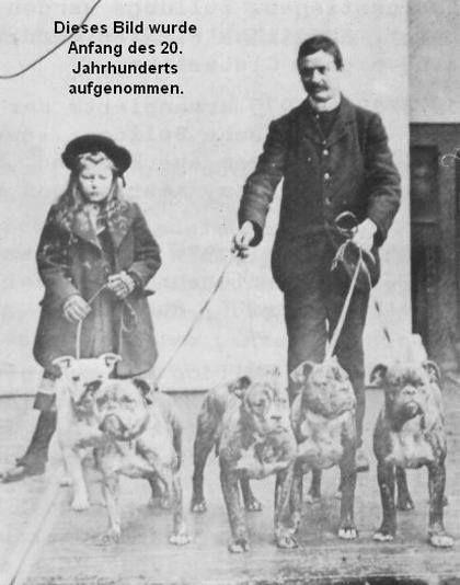 English Bulldogs in the 1800's