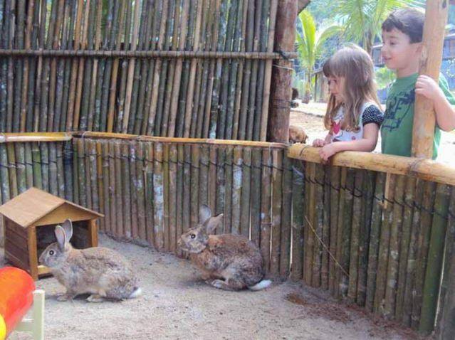 Foto de Pousada Das Cachoeiras em  Ubatuba/SP:  recanto dos coelhos