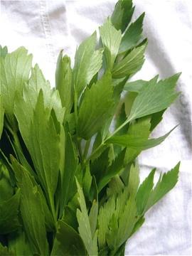 Interesting herb - Lovage