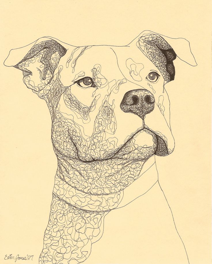 Dogs Drawings Pitbull - Pets For U