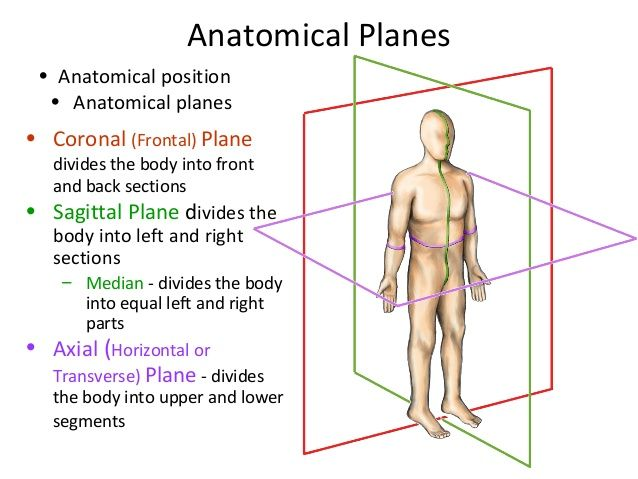 planes of the body - Google Search