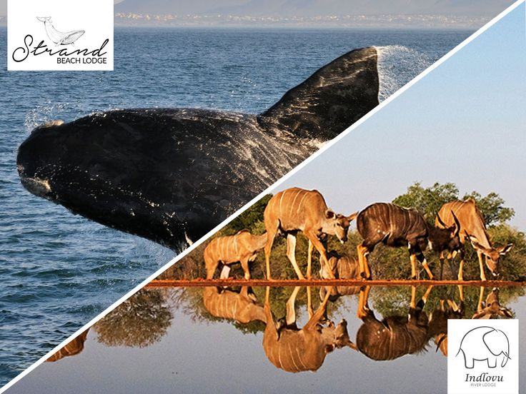 Enjoy 10% off our 7 night bush and beach safari!  A bush and beach safari combines the best South Africa has to offer. Add to this a sense of home-away-from-home and luxury accommodation, and you have found the family safari of a lifetime.  View details here: http://ow.ly/qre1307CHcM