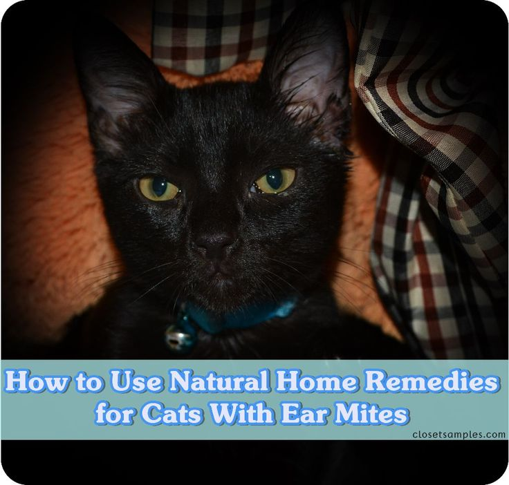 Cure Ear Mites In Cats Naturally