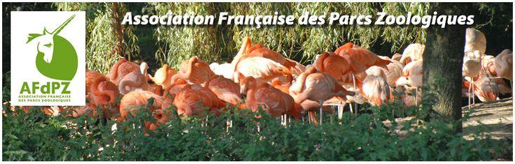 L' #AFdPZ vous propose des offres d' #emploi auprès des #animaux en #ParcZoologique sur http://www.afdpz.org/index.php?option=com_content&view=article&id=66Itemid=76&Itemid=76 !