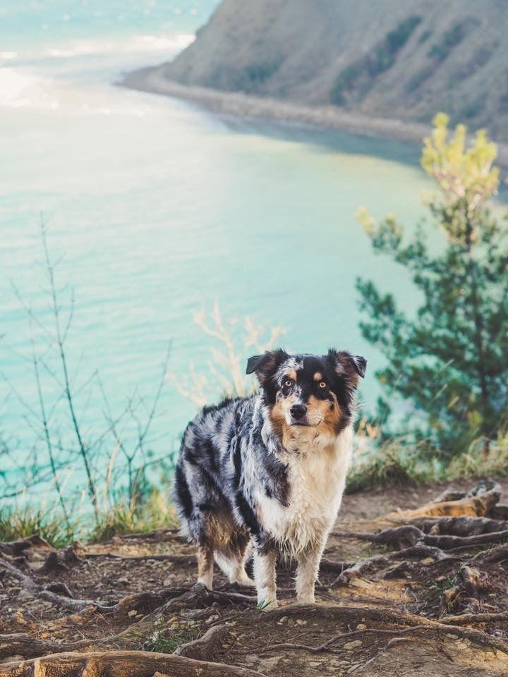SLOVENIA - Mesečev Zaliv, hiking with dog, australian shepherd