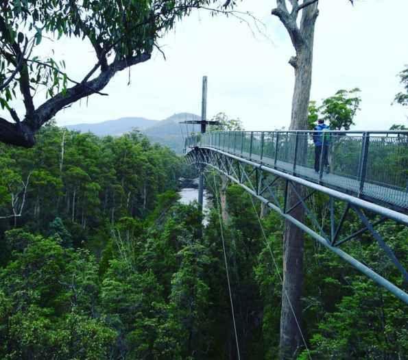 Walk above the treetops.