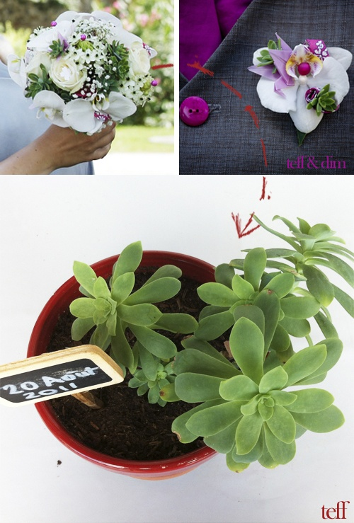 1000 id es sur le th me souvenirs de mariage de plantes sur pinterest faveurs de mariage - Mini plante grasse mariage ...