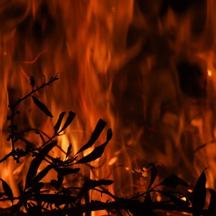 Kebakaran hutan merupakan hal yang sangat merugikan bagi bumi dan penghuninya, berkurangnya pepohonan yang akan menyerap CO2 dan menyebarkan gas CO2 ke alam yang mengakibatkan penipisan lapisan ozon, punahnya beberapa spesies tanaman, hilangnya beberapa binatang... #fireforest #forest #saveforest