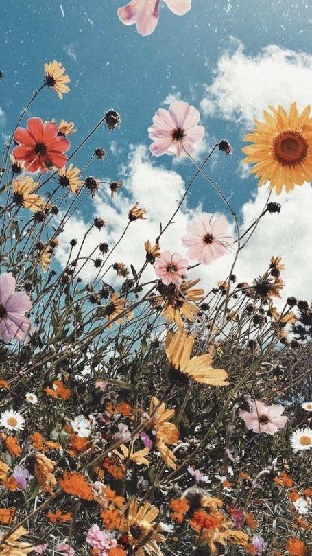 𝐩𝐢𝐧𝐭𝐞𝐫𝐞𝐬𝐭 𝐫𝐚𝐢𝐠𝐚𝐧𝐜𝐥𝐚𝐫𝐞 𝐢𝐧𝐬𝐭𝐚 𝐫𝐚𝐢𝐠𝐚𝐧𝐱𝐜𝐥𝐚𝐫𝐞 Sunflower