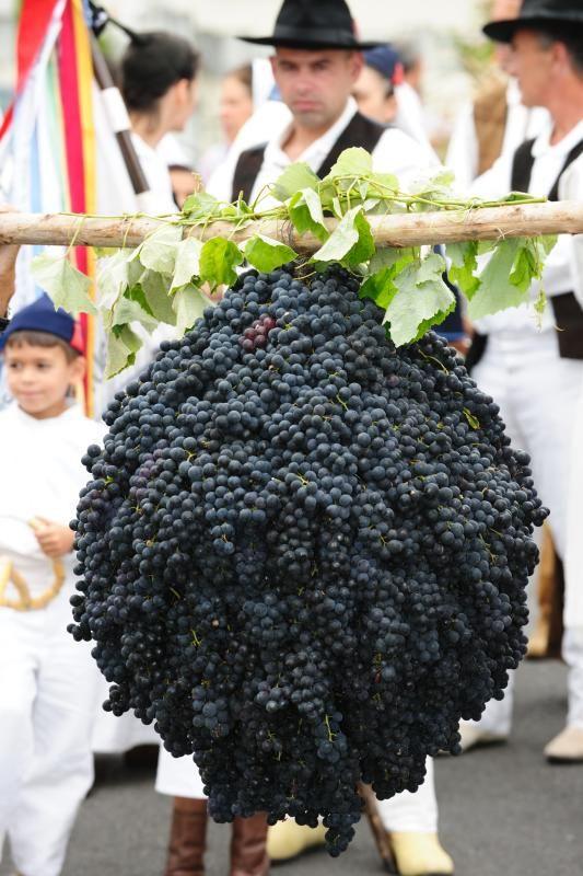 Festa das Vindimas / Wine Festival
