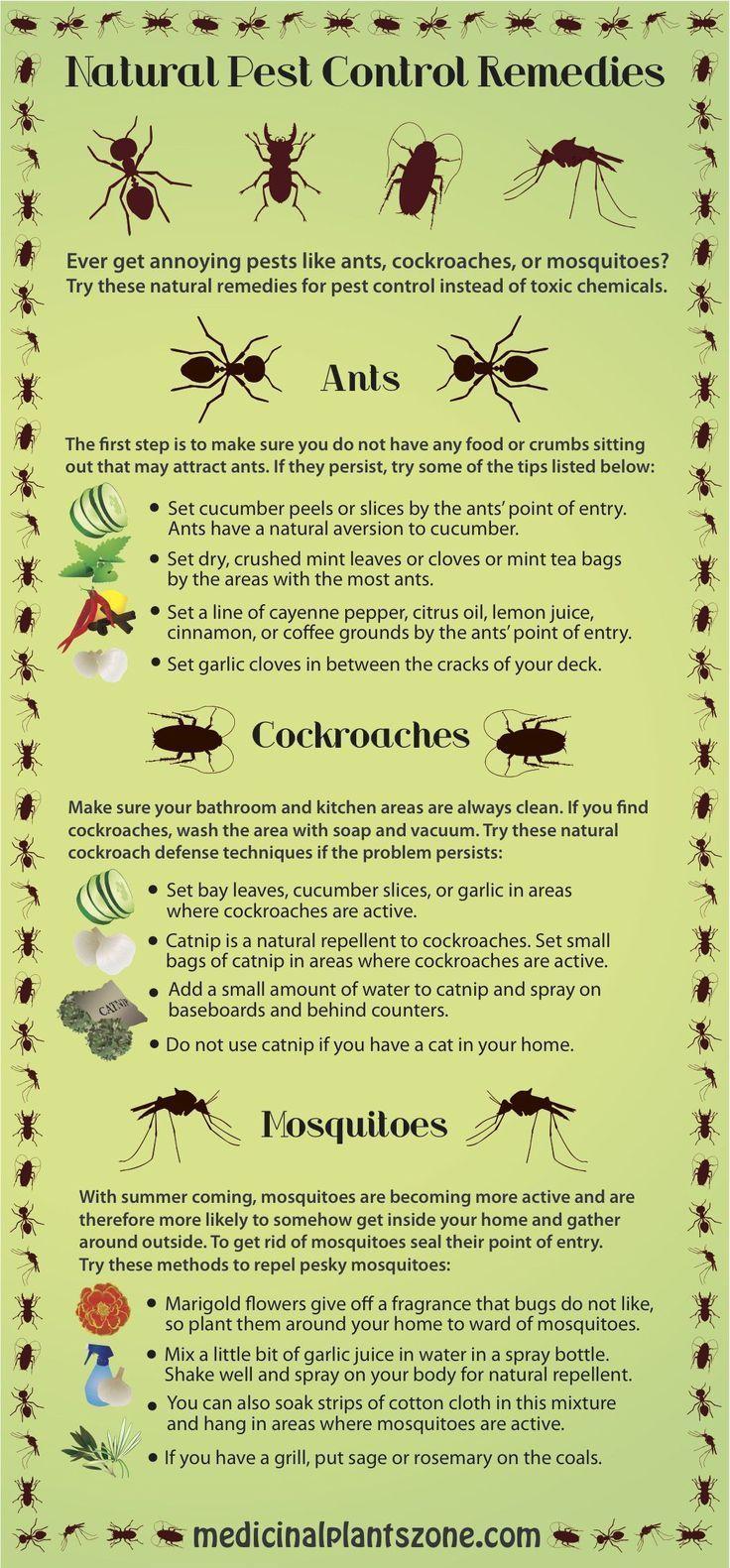 natural pest control remedies #pestcontrolnatural   helpful ideas