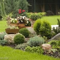 Skalniak Najlepsze Iglaki Do Ogrodu Skalnego Plants Garden Garden Decor