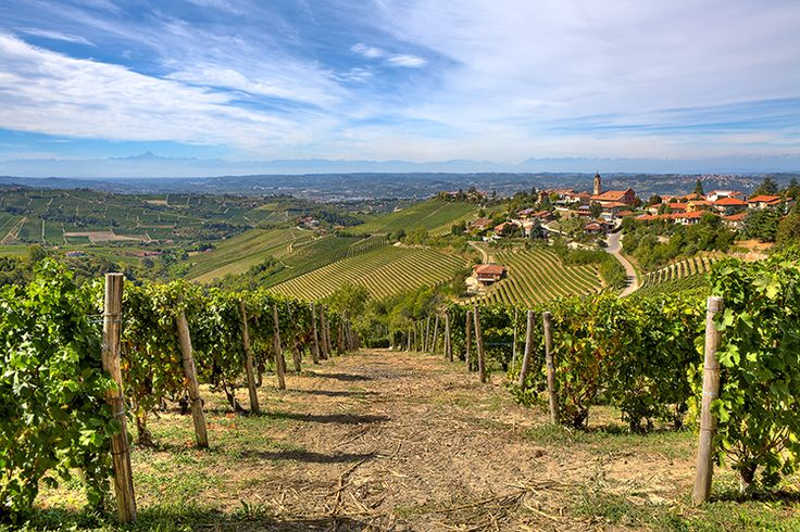 The rolling countryside of Piedmont is dotted with vineyards and hilltop towns. Image by Rostislav Glinsky / Shutterstock