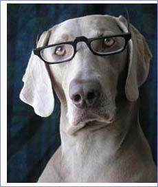 Középpontban A KUTYA: Intelligencia teszt kutyáknak :)