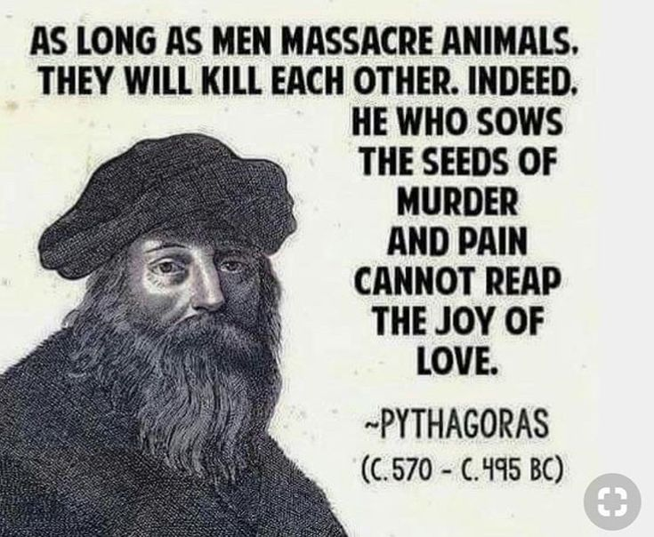 """The etymology (i.e. """"true meaning"""") of the word MURDER is made up of two roots; mur/mer, meaning (to put to) death, and der, meaning animal, beast, living breathing creature. Originally, MURDER referred to both human animals and nonhuman animals. As time passed and ugly speciesism spread, it became acceptable for humans to murder nonhumans for pleasure or other self-interest. Attempts were made to alter the original definition by excluding nonhumans, conveniently awarding us a clear…"""