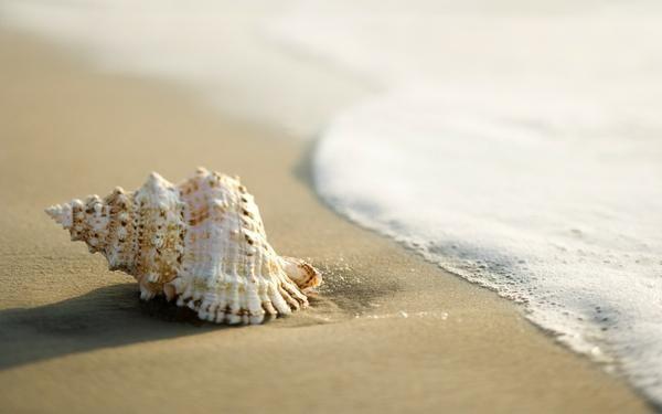 macro photography beach - Google Search