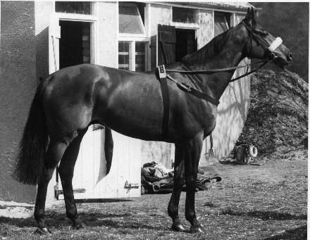 Champion steeplechaser Red Rum, winner of three Grand Nationals (and second in two).