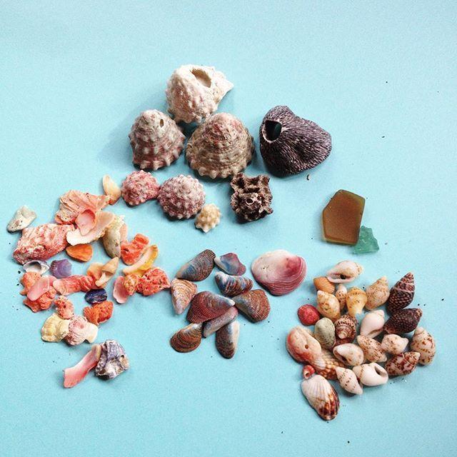 【qmqmboat】さんのInstagramをピンしています。 《先月、沖ノ島にてビーチコーミングしましま。海無し県民大はしゃぎしてきました。 沢山拾った中の選抜チームです。 一部金魚鉢に入れました。 #ビーチコーミング #貝殻 #海 #沖ノ島 #シーグラス あまりなかった》