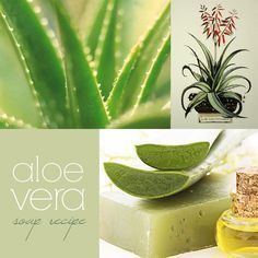 Aloe Vera cold process soap recipe with coconut oil, olive oil and shea butter.   Makes a gentle, moisturizing soap that's great for sensitive skin.