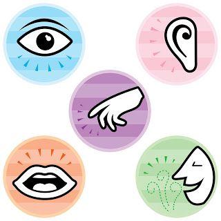 Illustrations des 5 sens.