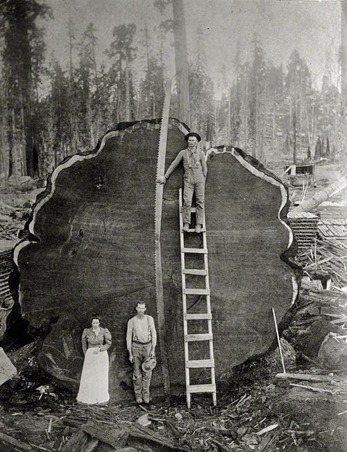 (3) geographic | Tumblr. This is amazing.  I cannot imagine the height of this tree if that is it's circumference. WoW ;)