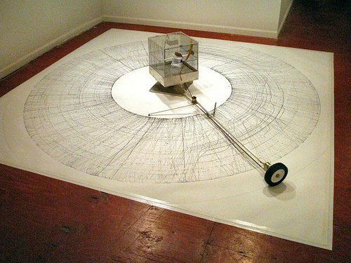 DAVID SHINGLER - Bird Drawing Machine (2008). It consists of a rotating arm on which is mounted a birdcage that contains two tiny birds. As the arm rotates, a stylus shoots out from time to time down and back up parallel to the arm, forming ellipses.: