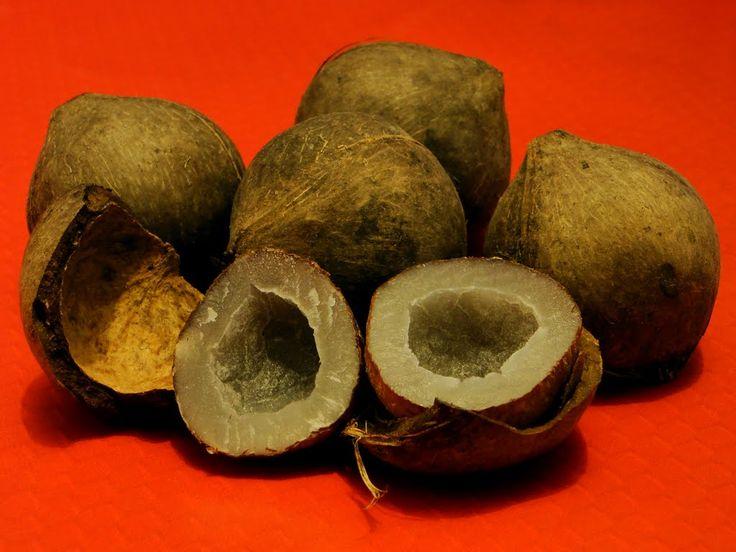 Nueces de coco de Palmera Chilena