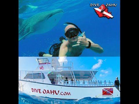 Dive Oahu   Best Scuba Diving Center in Hawaii