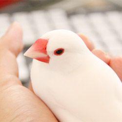 10月24日は「文鳥の日」                                                                                                                                                                                 もっと見る