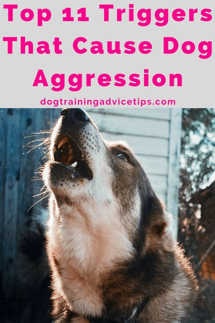 Top 11 Dog Aggression Triggers Aggressive Dog Dog Training Near