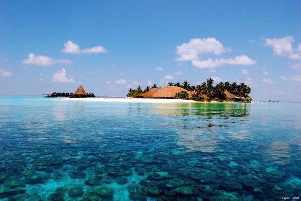 Мальдивы   Мальдивы образованы из 26 атоллов, расположенных на 400 километров южнее полуострова Индостан. Богатая фауна рифов (там даже китовые акулы водятся) и невероятно чистая вода привлекают туристов. Кроме того, на Мальдивах можно встретить редкие виды исчезающих животных.  #travel #travelgidclub #путешествия #traveling #traveler #beautiful #instatravel #tourism #tourist #природа #Мальдивы #атолл #океан #остров #island