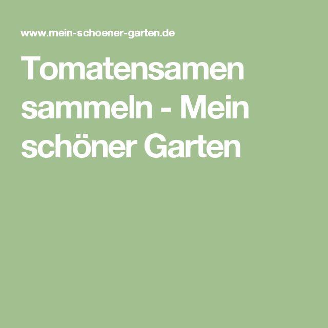 Tomatensamen sammeln - Mein schöner Garten