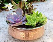 Succulents potted in copper bowl