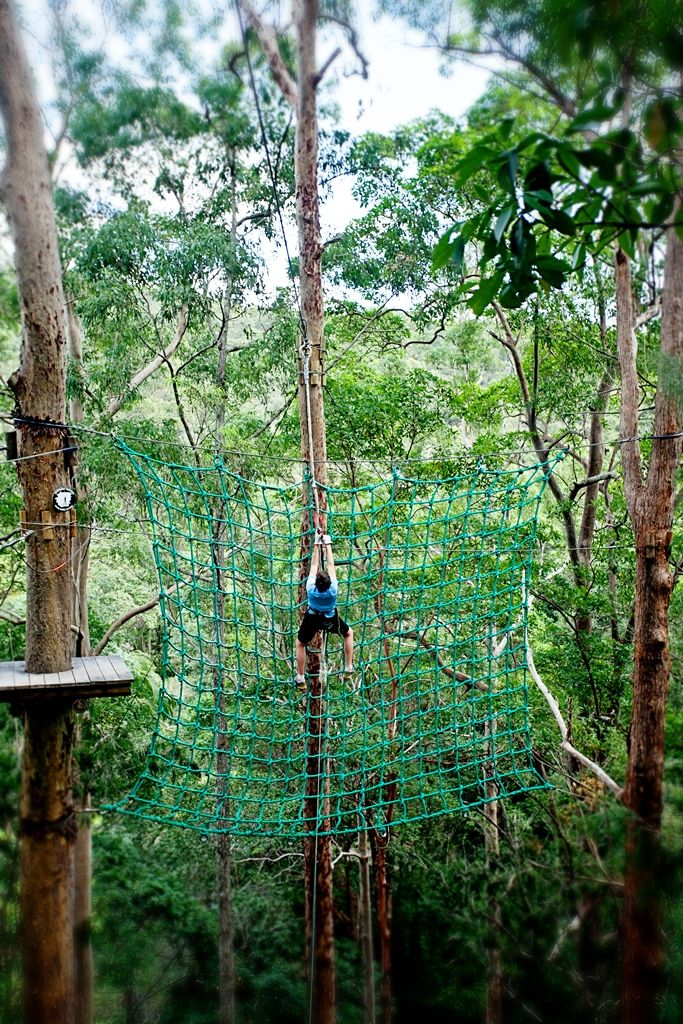 High Ropes Course, Tree Top Challenge, Mount Tamborine