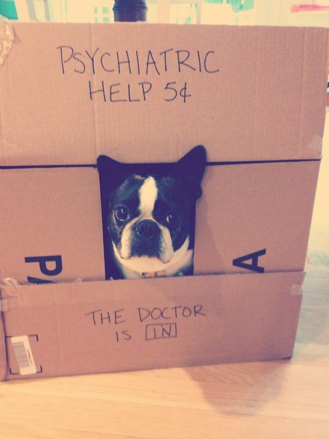 The Doctor is in - Who needs Psychiatric Help? (Photo) - http://www.bterrier.com/the-doctor-is-in-who-needs-psychiatric-help-photo/