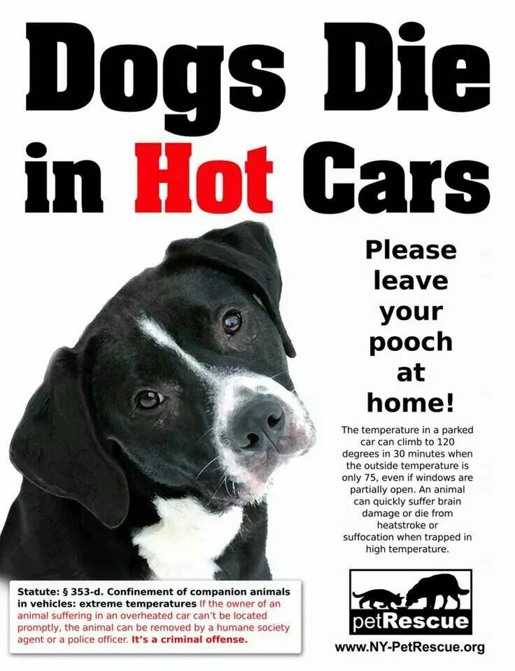 Leave Your Pets At Home With Images Dog Died Dogs Hot Cars