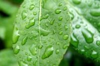 JSPuzzles - Play free Jigsaw puzzles online - Waterdrops on a leaf