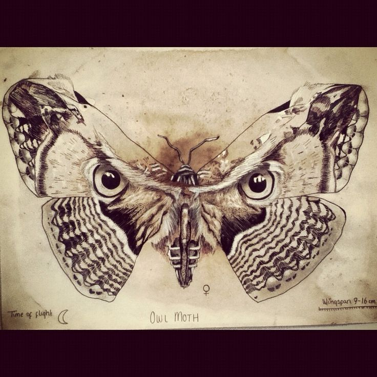 Owl Moth - Pen, Pencil, Coffee #owl #moth #drawing #art